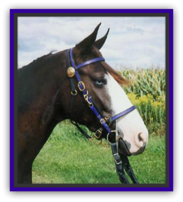 "T-H/B1 ""Deluxe"" Halter Bridle"