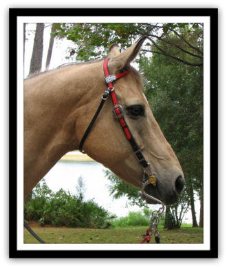 "ONE EAR ""CLASSIC"" HEADSTALL"