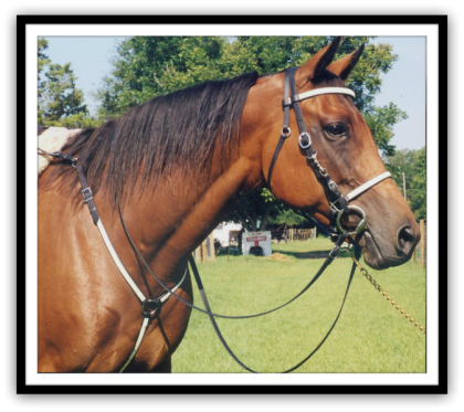 """SABROSONIA""  Thoroughbred Mare"